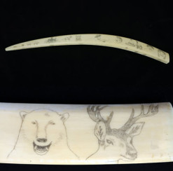 Walrus tusk with scrimshaw