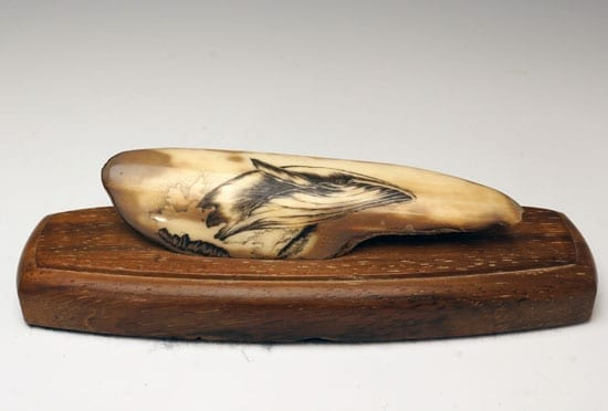 Scrimshaw bowhead whale home away gallery