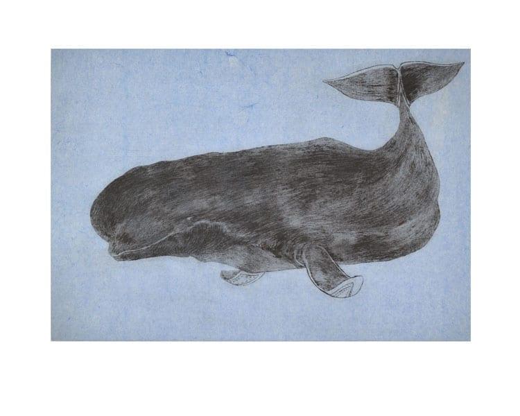 Tim Pitsiulak Ancient Beluga