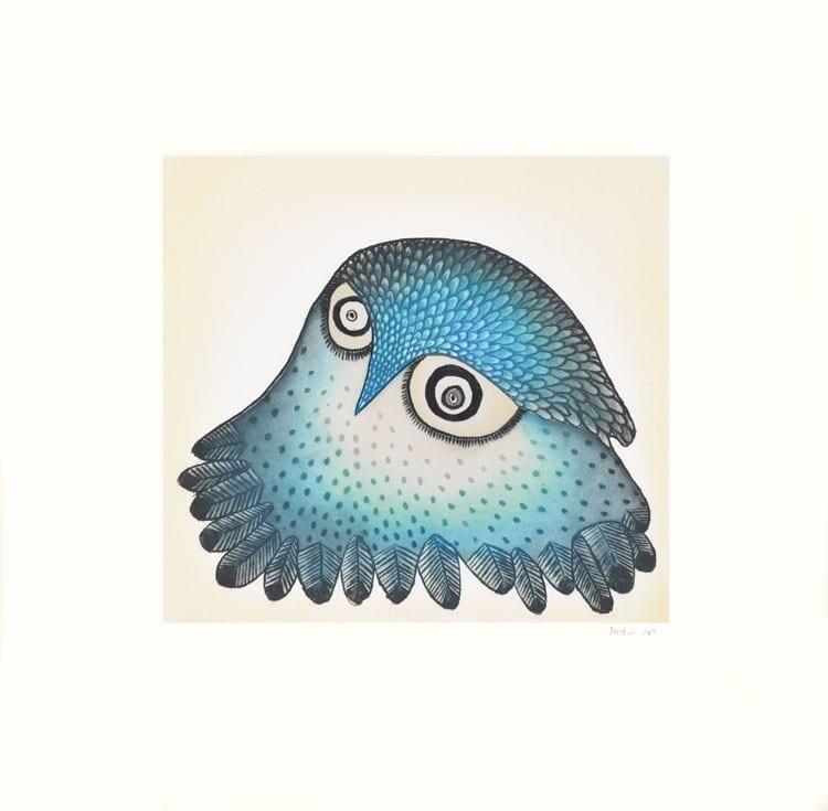 Ningukulu Teevee Innocent Owl