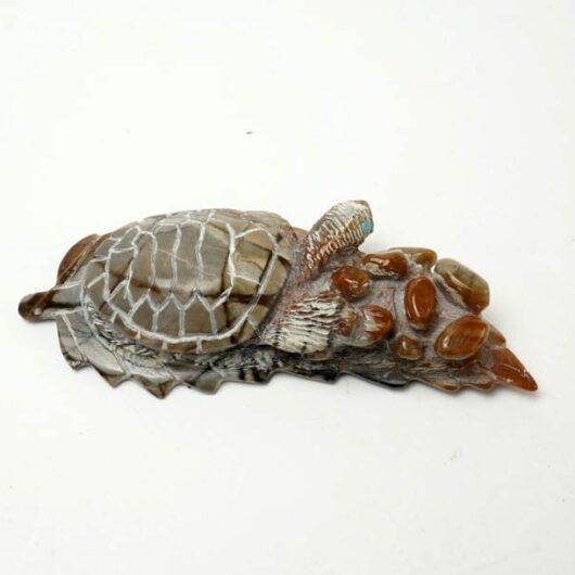 Adrian Cachini turtle on leaf
