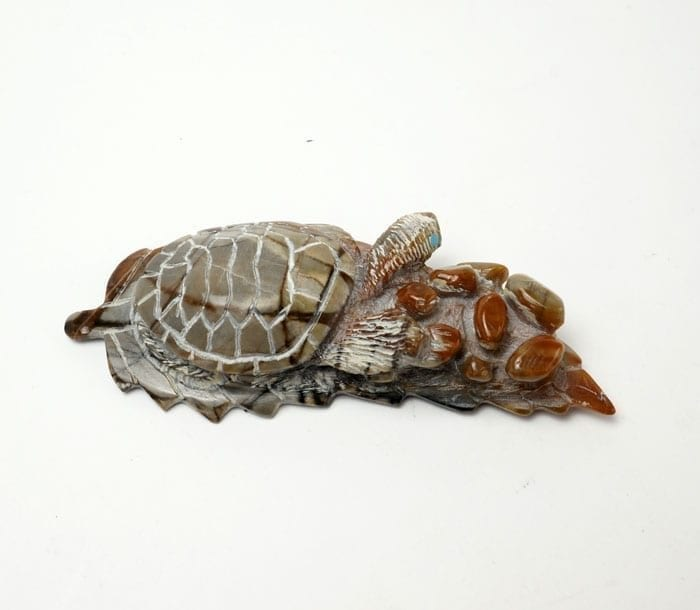 Adrian Cachini turtle on leaf