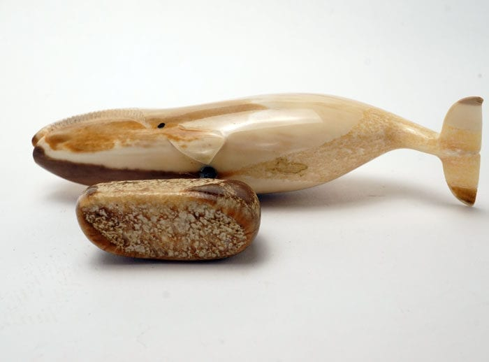 Ivory Bowhead whale