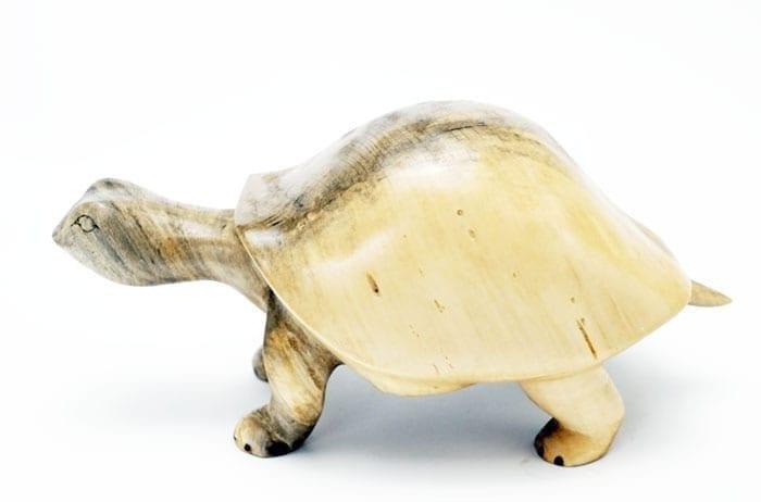 Robbie Craig Buckeye Wood Turtle Online
