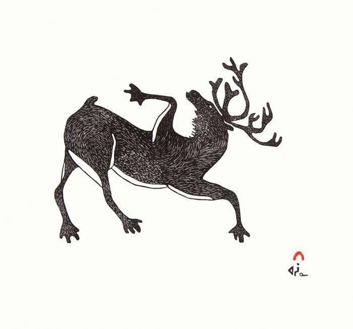 AXANGAYUK SHAA Lively Caribou