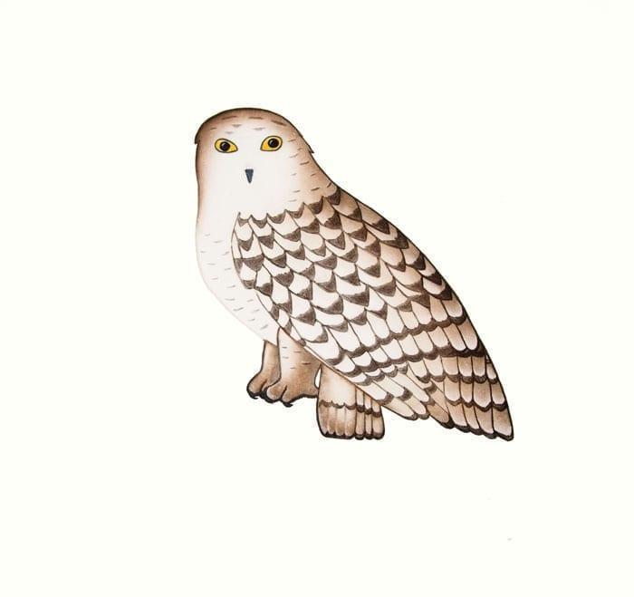 PAUOJOUNGIE SAGGIAK Noble Owl