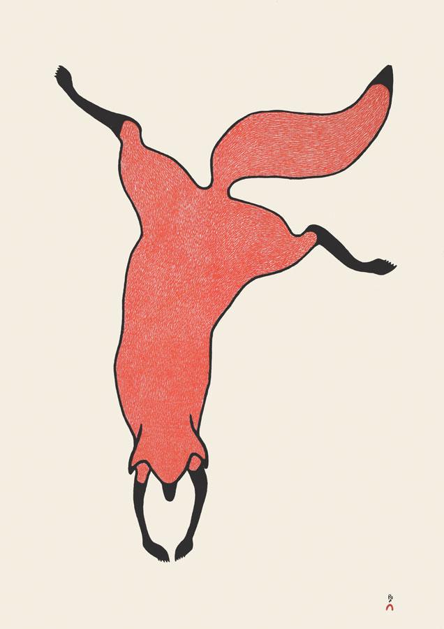 QUVIANAQTUK PUDLATAgile Fox