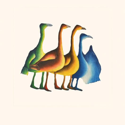PITALOOSIE SAILAGaggle of Geese