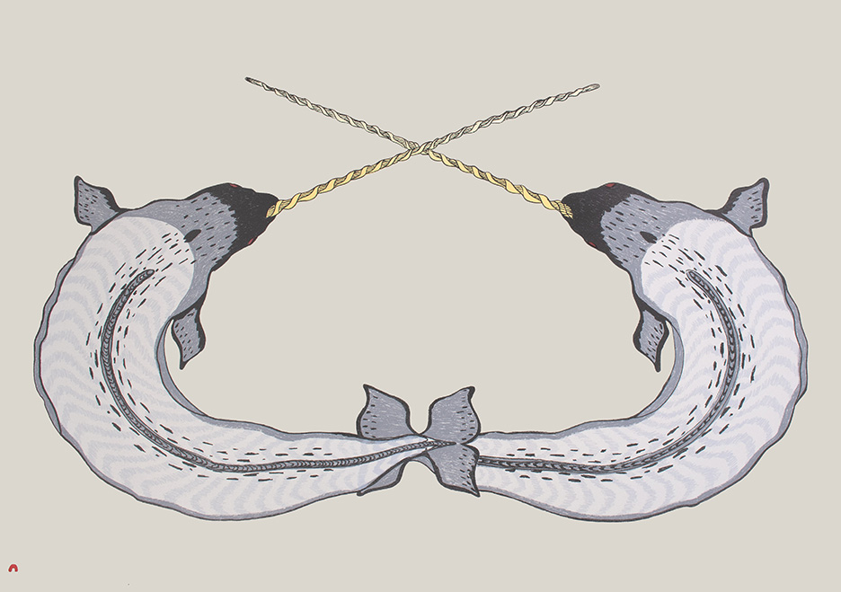 Sparring Narwhals by Quvianaqtuk Pudlat